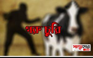Santahar Cow theif